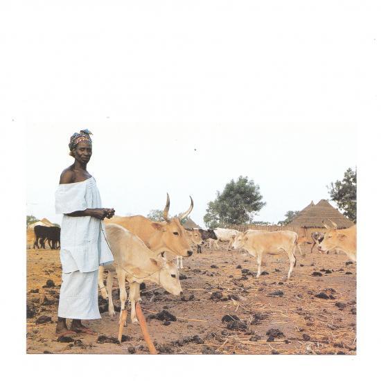 Mahoray Sumbunu met haar kudde Sabi, Gambia Mandy Elsas, 1999 Prijs: € 1.00
