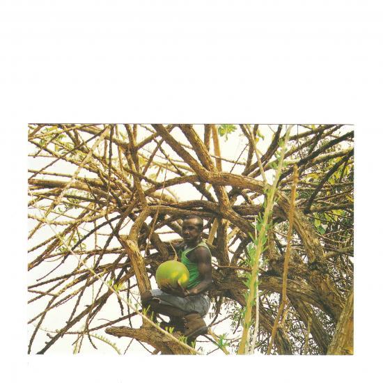 Apisco Kwame in kalabasboom Amoah Krom Town, Brong Ahafo District Mandy Elsas, 2000 Prijs: € 1.00